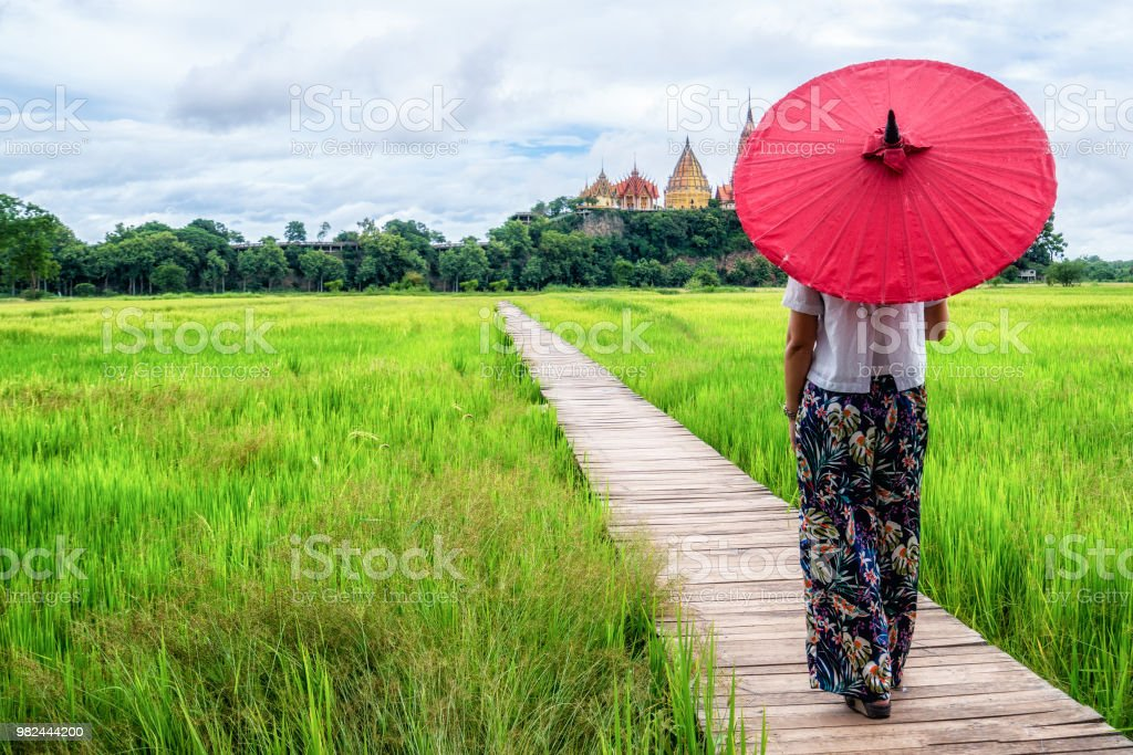 Woman traveller hiking Asian rice field landscape. stock photo