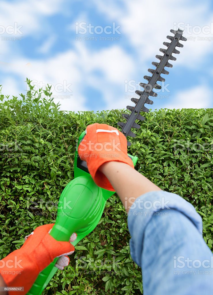 Woman trimming bushes using an electrical hedge trimmer stock photo