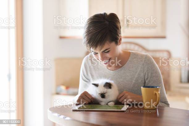 Woman using a laptop and cuddling her cat picture id901153300?b=1&k=6&m=901153300&s=612x612&h=60eb7yvk1oywhaeovsopqegpy6sut1slmshoxzitfru=