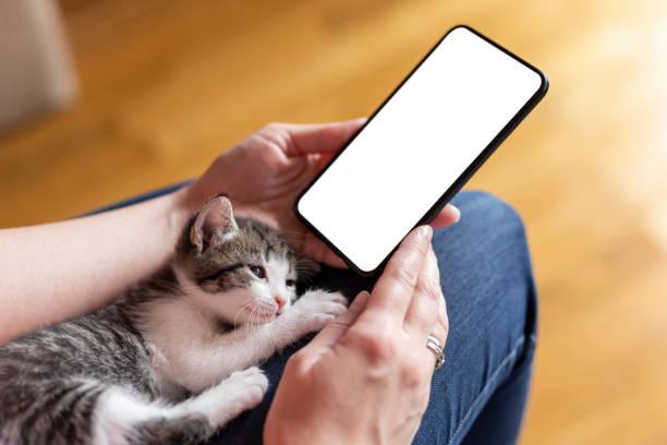 Woman using a smart phone and cuddling kitten stock photo