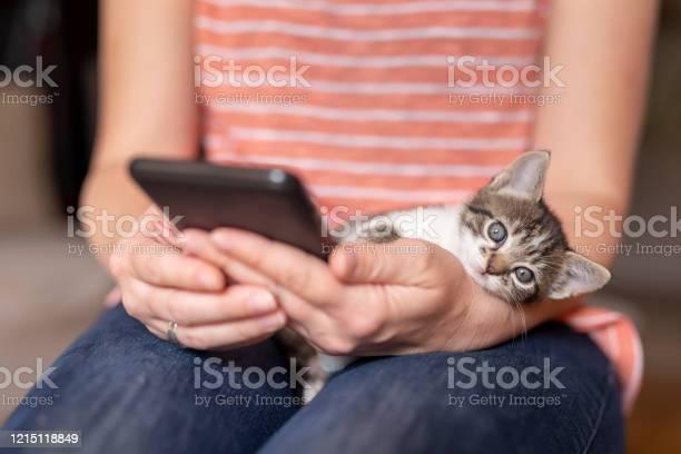 Woman using a smart phone and holding kitten picture id1215118849?b=1&k=6&m=1215118849&s=612x612&h= f dwrua5qy7nhogm8djak9mlquqpjaw1wdn48dpb4w=