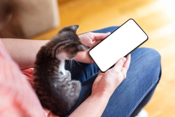 Woman using a smartphone and cuddling kitten stock photo