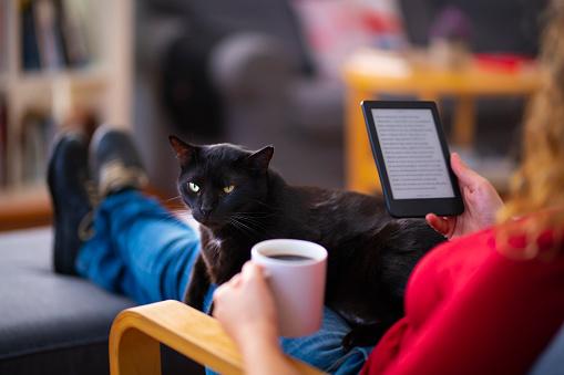 Frau Mit Einem Ereader Und Lesen Eines Ebooks Mit Ihrer Katze Zu Hause Stockfoto und mehr Bilder von Arbeiten