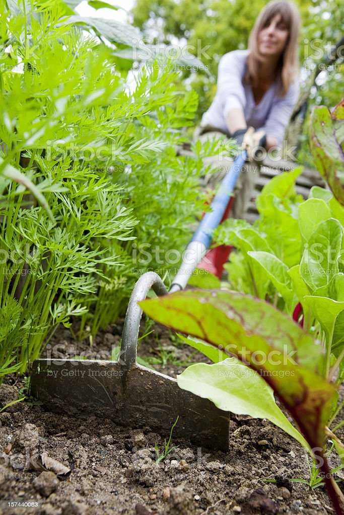 Woman Using Garden Hoe in Vegetable Patch stock photo