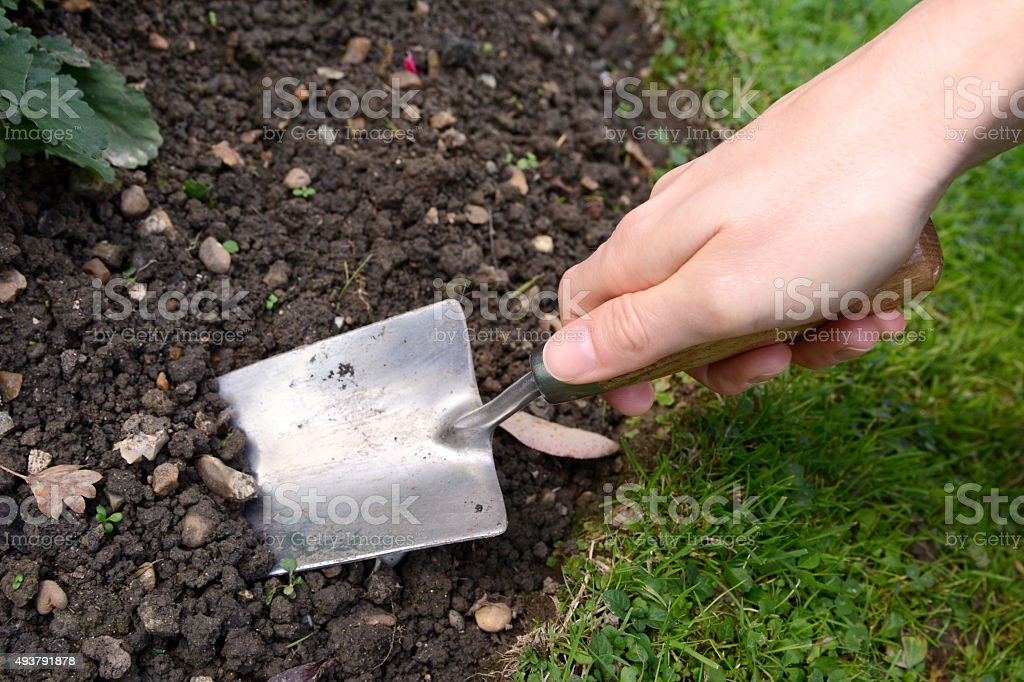 Woman using hand trowel to dig stock photo