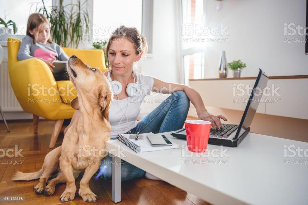 Kvinna med laptop och strök en hund royaltyfri bildbanksbilder