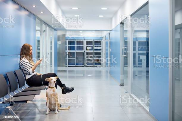 Woman waiting for her dog to be examined by doctor picture id916855580?b=1&k=6&m=916855580&s=612x612&h=aw5jirkrornm0ksg3nanqn pjqii9hnahr aylwsupo=