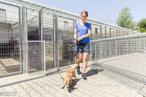 Woman walking a dog in animal shelter picture id928400866?b=1&k=6&m=928400866&s=612x612&h=5meqy2ufouzbfrldwnyuj630ldkbni97ycntcpfytuy=