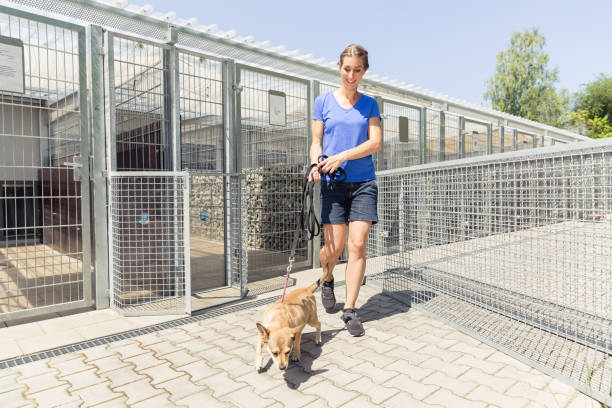 Woman walking a dog in animal shelter stock photo