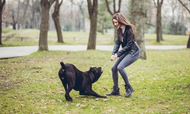 Woman walking a dog in public park picture id1016701814?b=1&k=6&m=1016701814&s=612x612&w=0&h=kqktook8rtzq h6kt8qrbjmo mxykpnsmcbgebnjwjq=