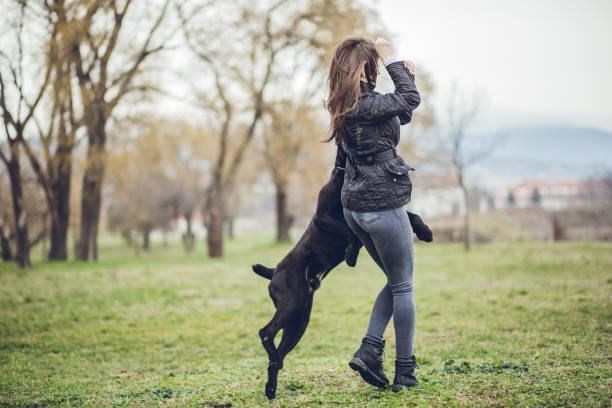 Woman walking a dog in public park picture id1179731683?b=1&k=6&m=1179731683&s=612x612&w=0&h=sghxivvph92jevcuxeoe5nc9tyjodj k4dc9jljy di=