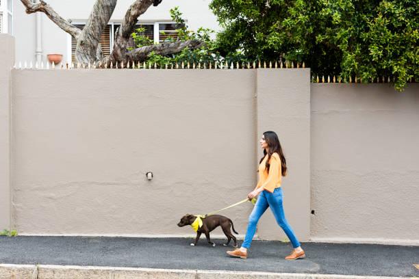 frau, die einen hund in den vororten - leinenhosen frauen stock-fotos und bilder