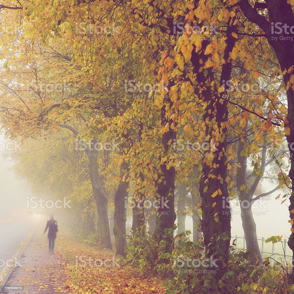 Woman Walking Along Autumn Path In The Fog stock photo