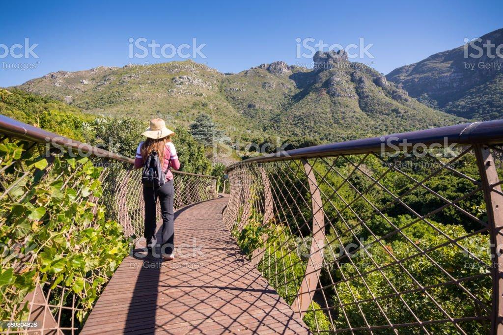 Woman walking along tree canopy walkway in Kirstenbosch Botanical Garden stock photo