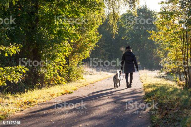 Woman walking dog in fall colors picture id847197246?b=1&k=6&m=847197246&s=612x612&h=tzkfejbf3ux116z2zu9u7o1hvdgbuo0o vqhvhkvmv4=