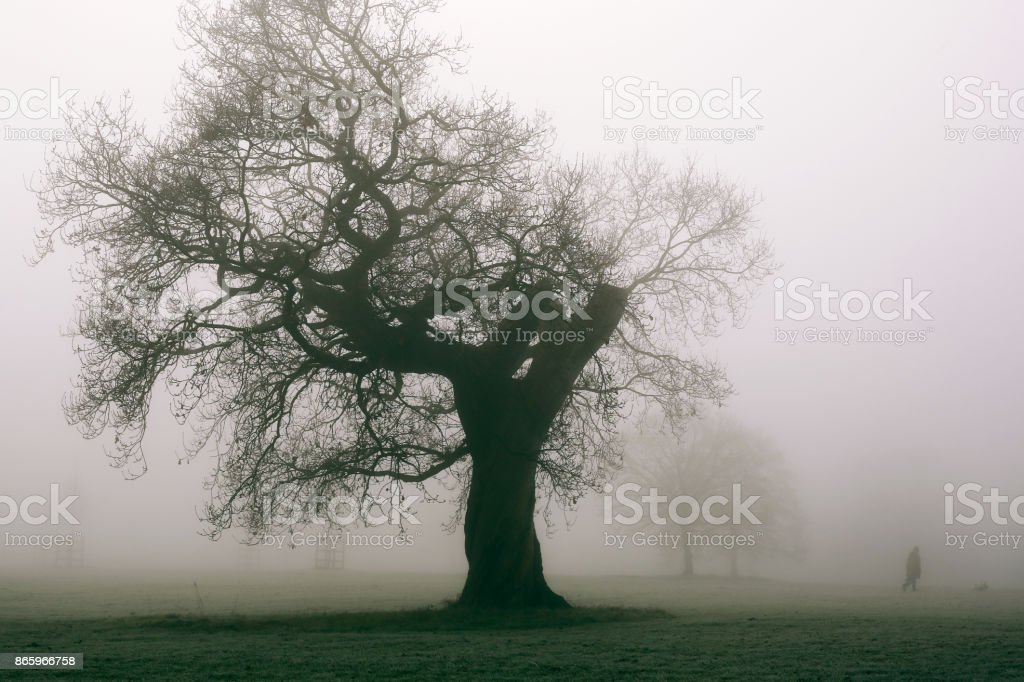 Woman walking her dog in a park on a frosty foggy winter morning. stock photo