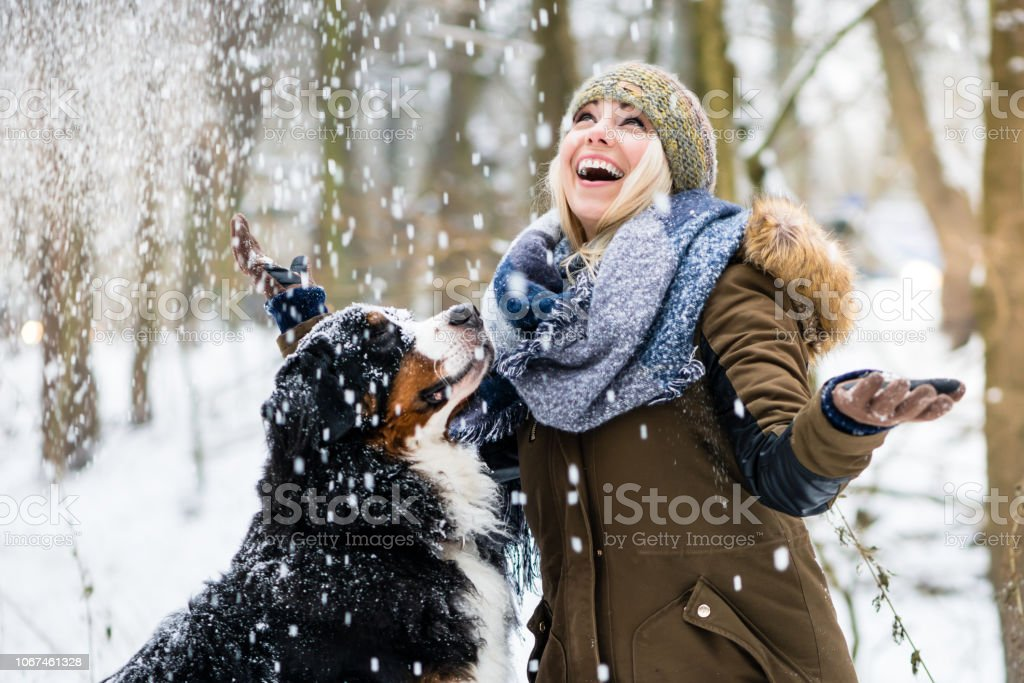 Woman walking her dog in the winter and both explore the snow together stock photo