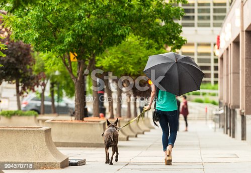 A woman shelters from the rain as she walks her dog, from a animal rescue shelter, along the street in Salt Lake City, Utah.