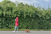 istock woman walking her poodle in park 871850904