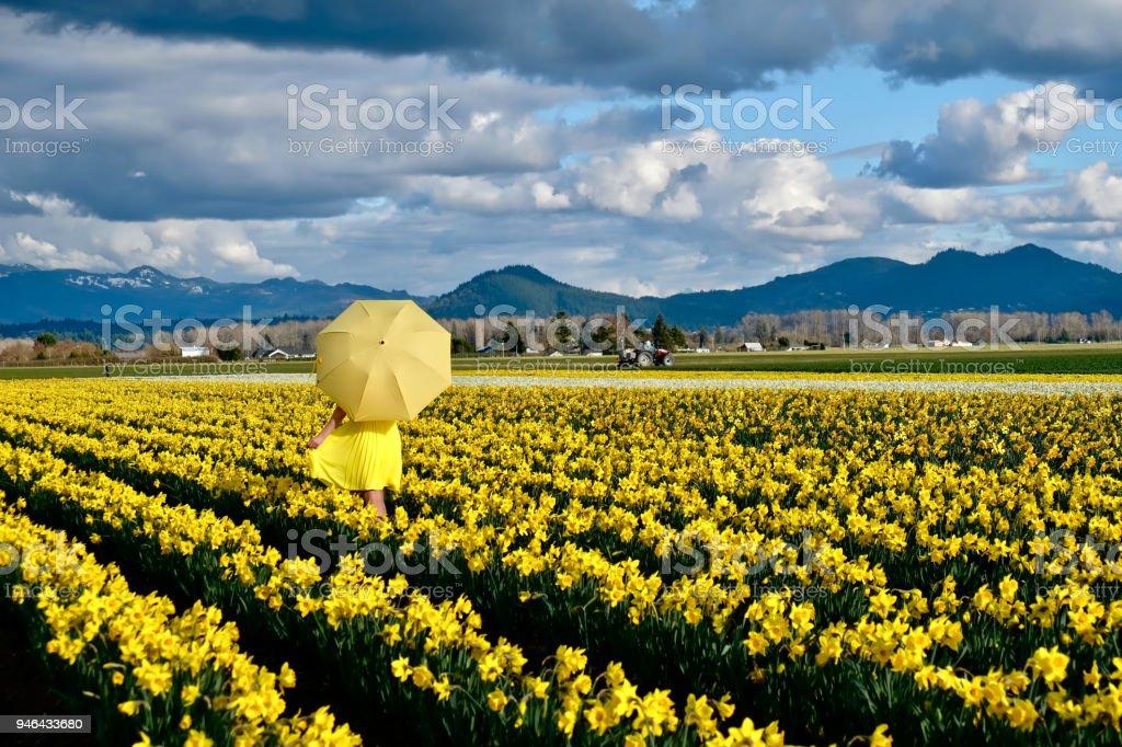 Frau zu Fuß auf Narzissen Gebiet mit gelben Regenschirm – Foto