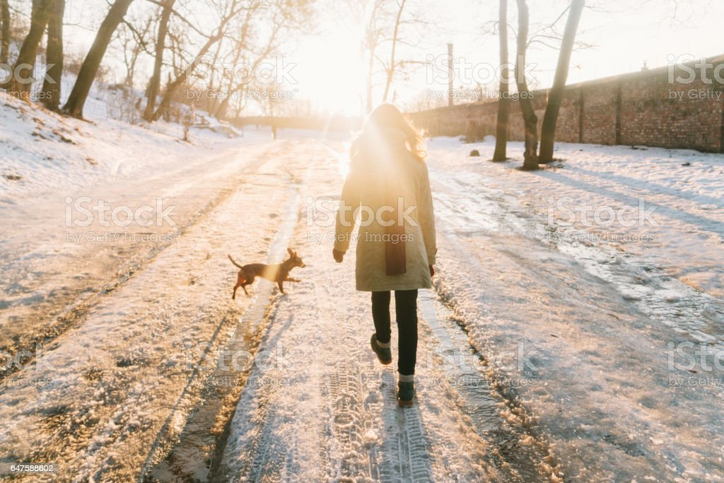 Woman walking in park with dog in winter stock photo