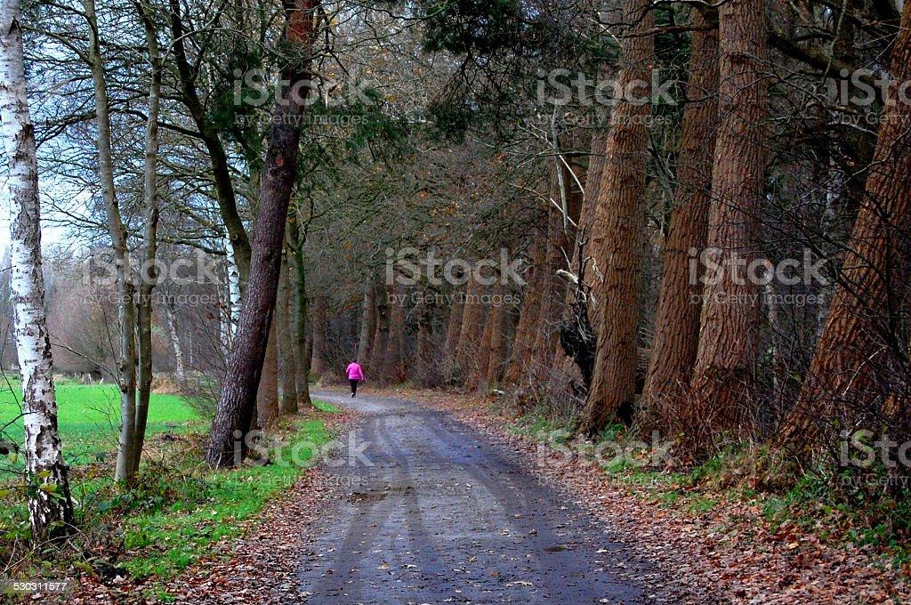 Frau zu Fuß im Wald – Foto