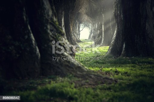 istock Woman walking in the mystic magic deep forest 898686542