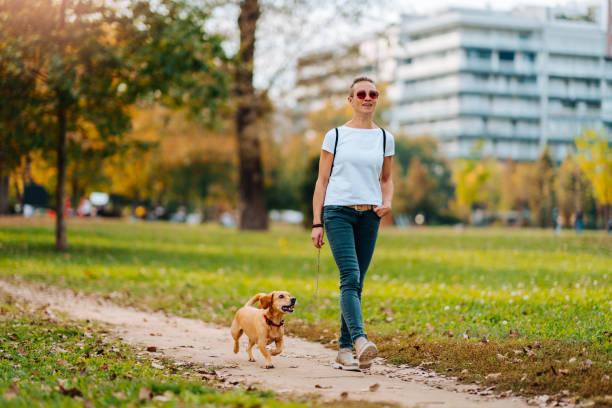 vrouw wandelen in het park met een hond in de herfst - zwarte spijkerbroek stockfoto's en -beelden