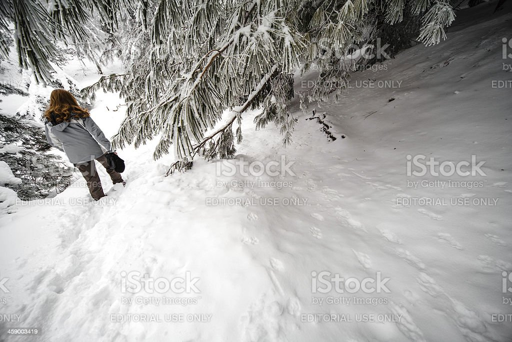 Woman Walking in the Snow royalty-free stock photo