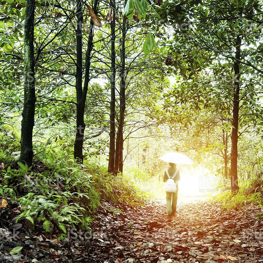 Woman walking in the woods royalty-free stock photo