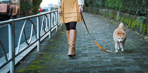 frau fuß angeleinte shibu hachiko statue hund im ruhigen, gepflasterten pfad - hunde strumpfhosen stock-fotos und bilder
