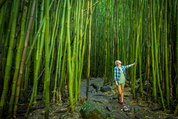 Woman walking through bamboo forest on Maui. stock photo