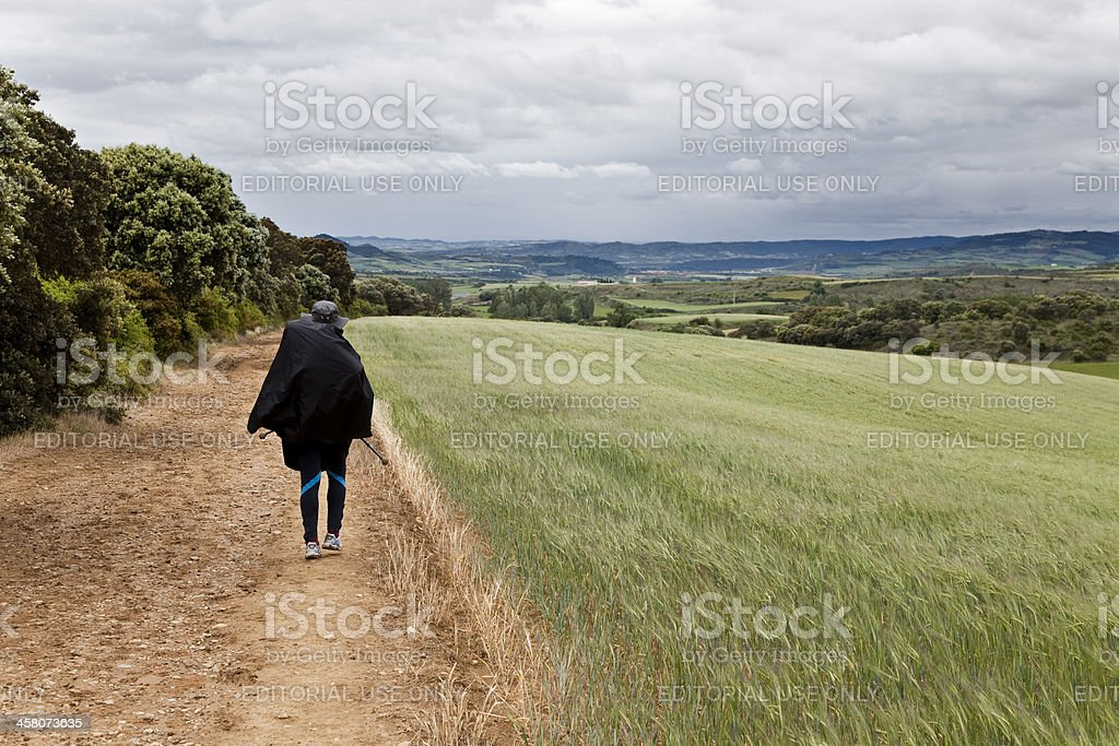 Woman walking through fields of wheat stock photo