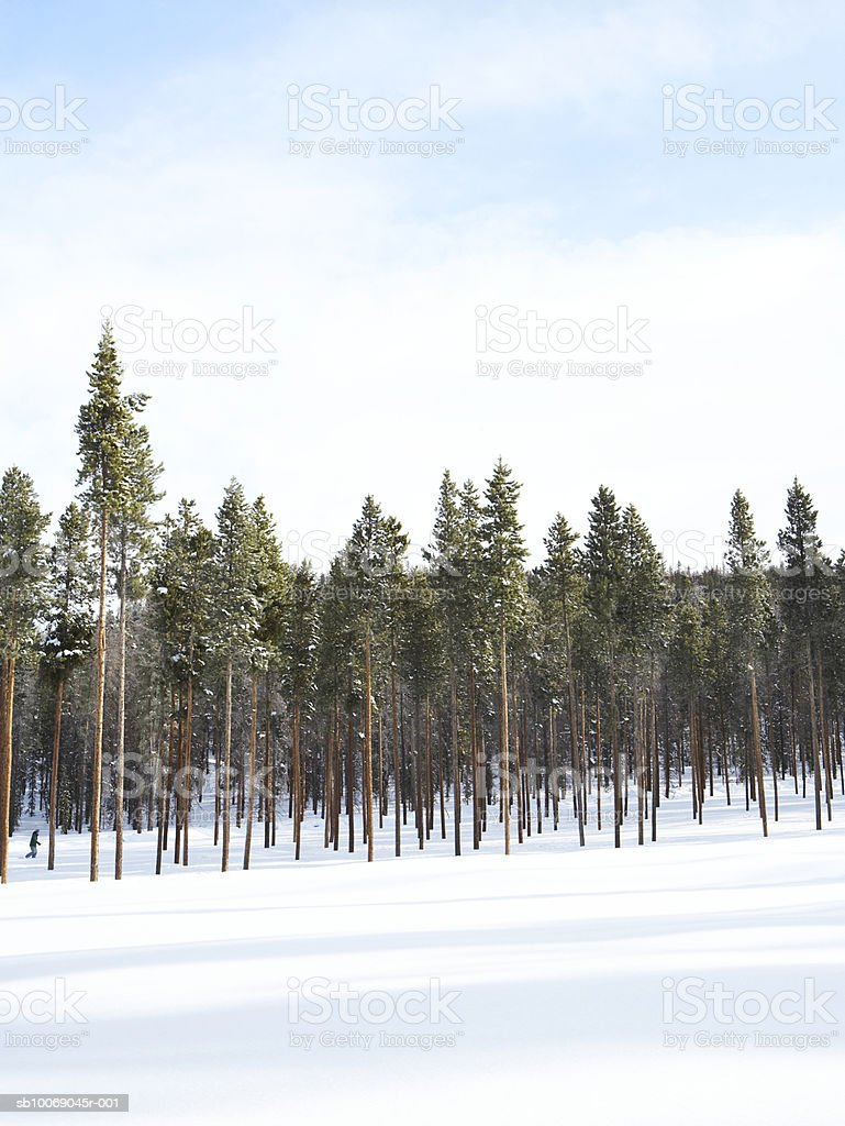 Woman walking through trees in snow 免版稅 stock photo
