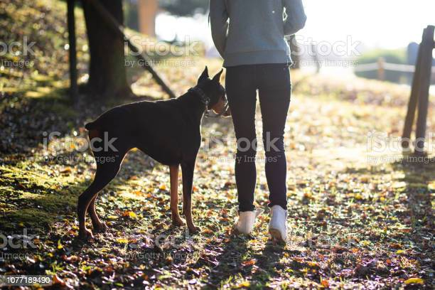 Woman walking with a dog picture id1077189490?b=1&k=6&m=1077189490&s=612x612&h=ozhmmufcf6seo78v2v3r3ybw0mxhepqkognccj9b8xc=