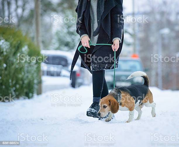 Woman walking with beagle dog on winter walk path picture id638166524?b=1&k=6&m=638166524&s=612x612&h=yr7ndlklq mbn17w6hajsixwqqvzx0epcxuamizyw4o=