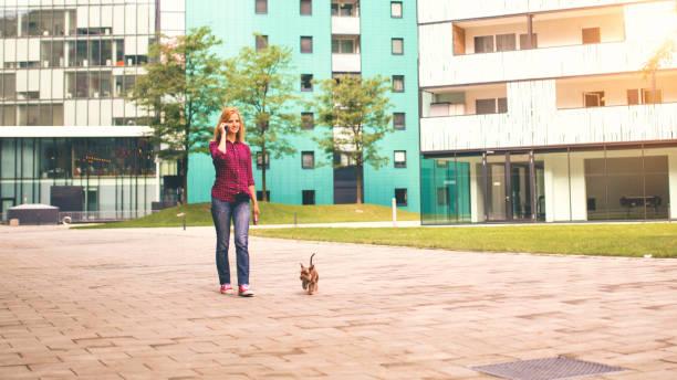 frau zu fuß mit hund im city street - leinenhosen frauen stock-fotos und bilder