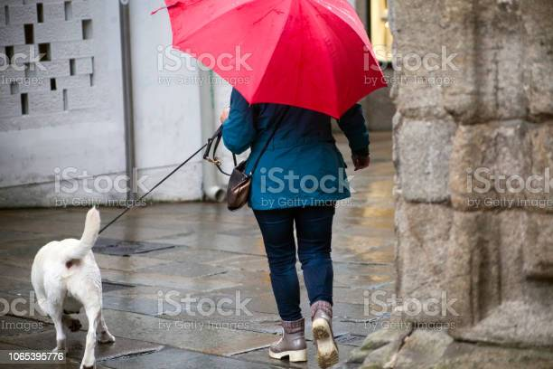 Woman walking with dog on leash and open umbrella in a rainy day picture id1065395776?b=1&k=6&m=1065395776&s=612x612&h=xtuchmbrwbdtuuyd5dcxzercc1ipek fgqhc vxwwyq=
