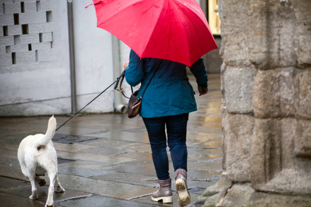 Woman walking with dog on leash and open umbrella in a rainy day picture id1065395776?b=1&k=6&m=1065395776&s=612x612&w=0&h=oeshvcjjelbjhkjfpjfgxjyx1voba10m9bedfivr2cg=