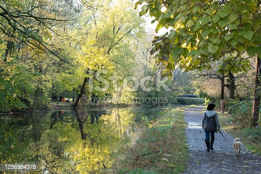 istock Woman walking with her dog along the river canal 1256954375