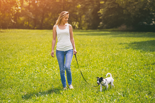 Woman walking with her  dog Jack Russell Terrier