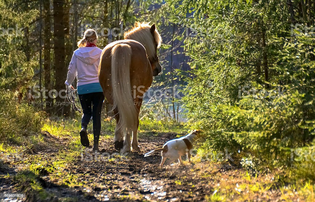 Woman walking with horse and dog stock photo