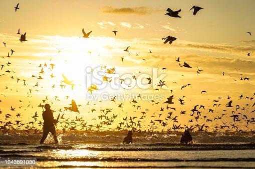 Orange sky illuminates flock of birds dive bombing the Ocean