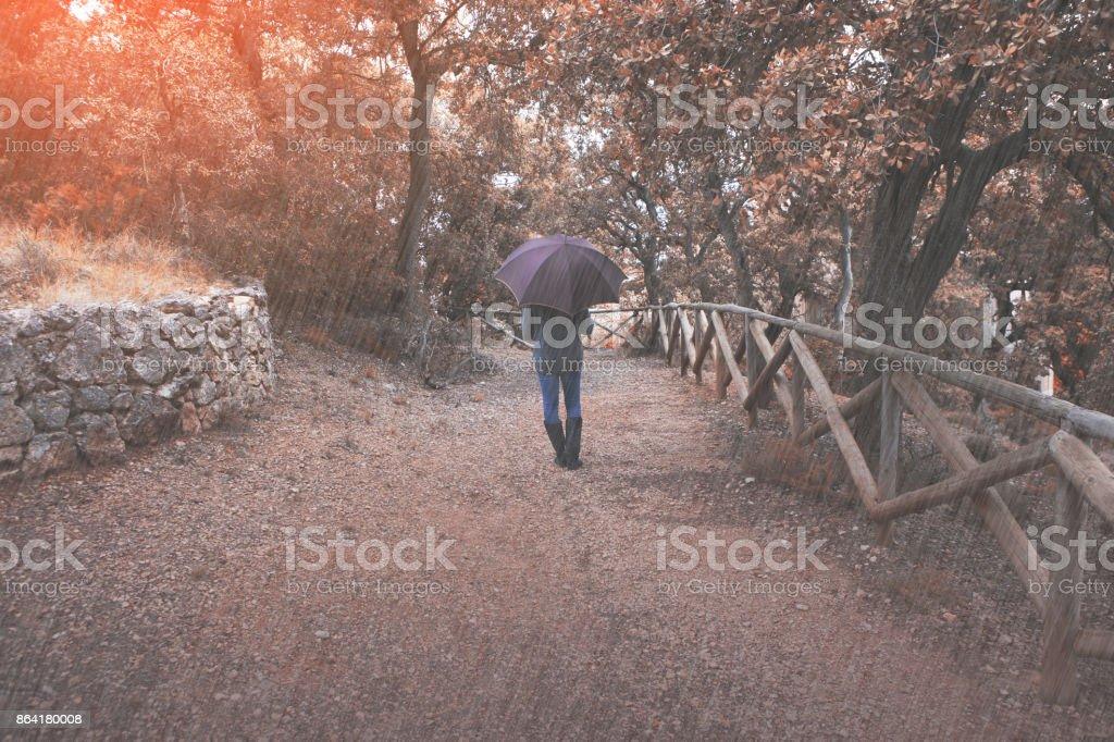 Woman walks in the autumn rain royalty-free stock photo