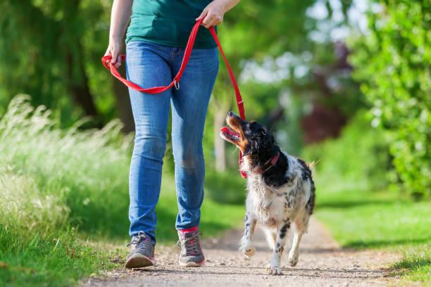 Woman walks with brittany dog on a footpath picture id693468884?b=1&k=6&m=693468884&s=612x612&w=0&h=liljsqn5f3oqhyw4su izisfs2icei2fusbju2nz9bw=