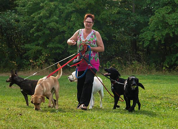 Woman walks with four dogs on green grass picture id471940031?b=1&k=6&m=471940031&s=612x612&w=0&h=lgllf7q05tr 8qw6yotmosjroom2y7fxz zbfzdcu6u=