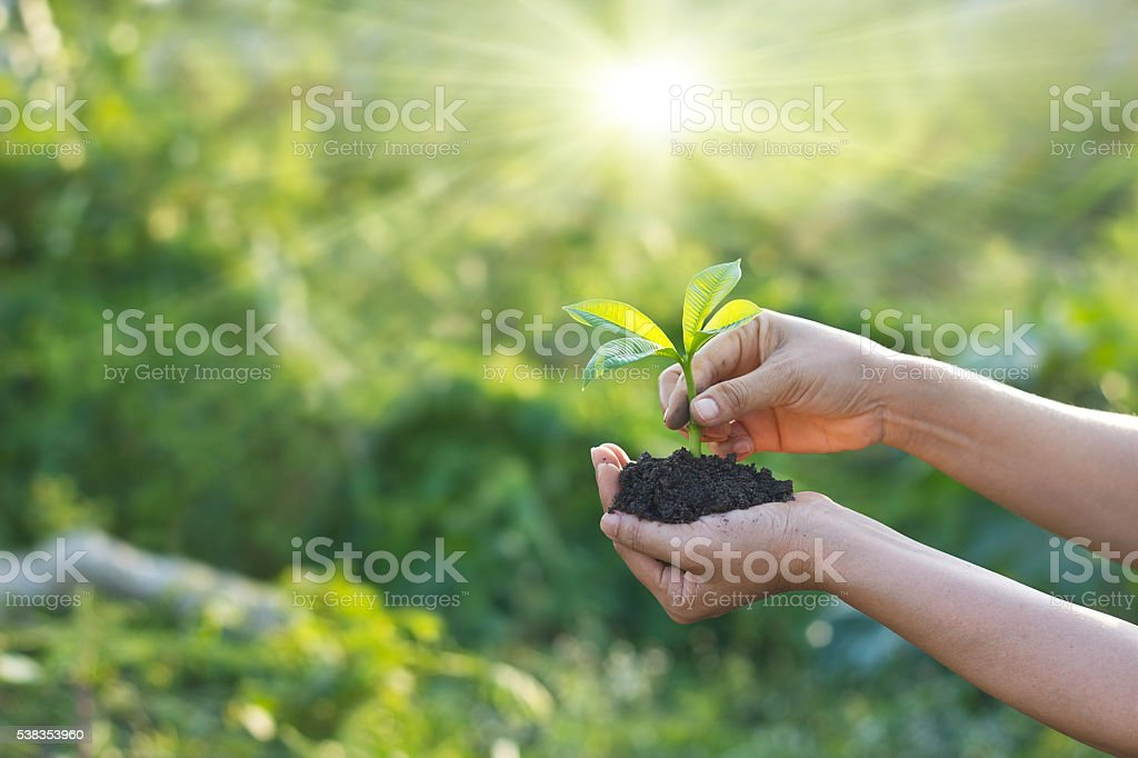 Woman was planting new born in garden background stock photo