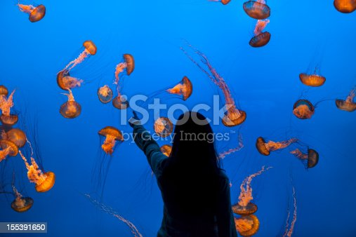 Girl points to fish, animals, plants and seaweed on the bottom of the ocean.  Sea nettle jelly fish animals, plants and seaweed
