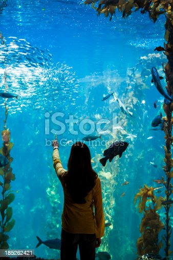 istock Woman watches sea life and fish underwater at an aquarium 185262421