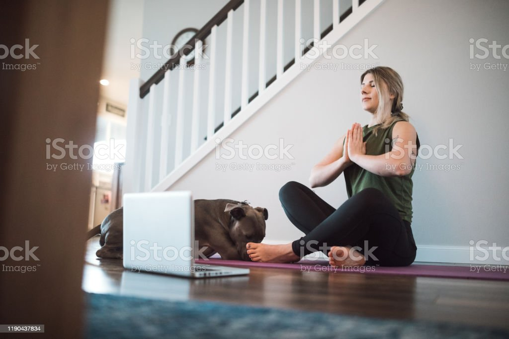 Woman Watching Yoga Tutorials Online With Her Dog Stock Photo Download Image Now Istock